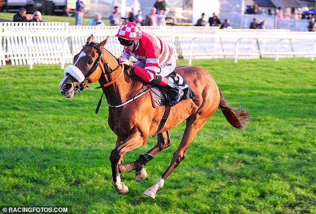 High Expectations (arriba) fue uno de los tres caballos que una vez entrenó Gordon Elliott y que terminaron en el matadero.